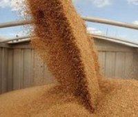 Минагрополитики повысило прогноз урожая зерновых до 64 миллионов тонн