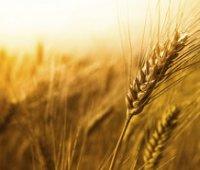Зернотрейдеры и Минагрополитики договорились ограничить объем экспорта пшеницы (обновлено)
