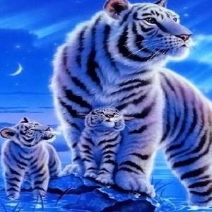 get tiger hd wallpaper
