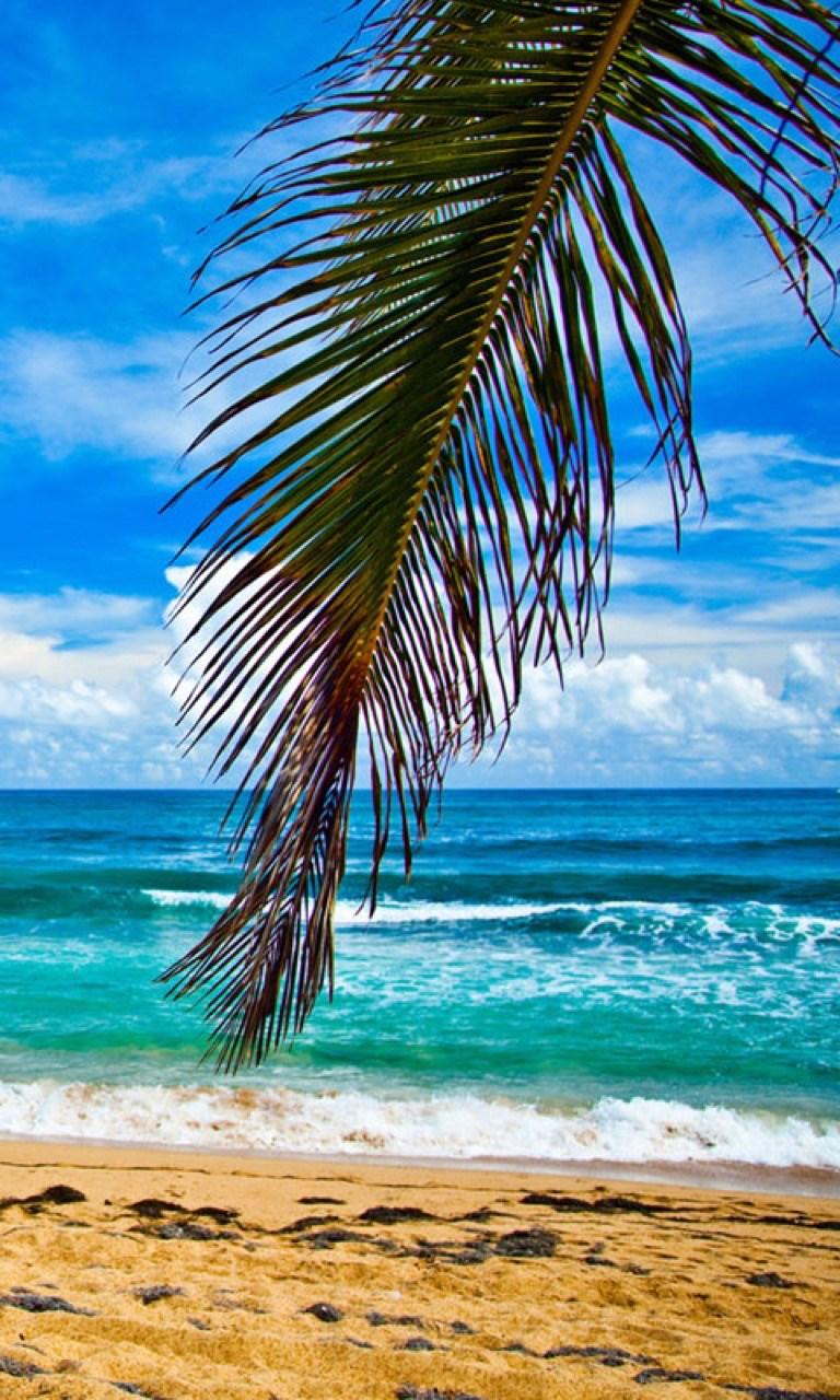 get summer beach wallpapers