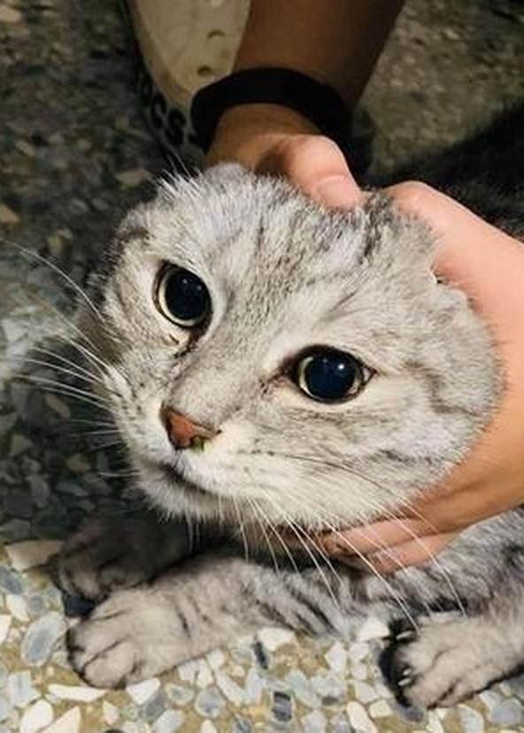 貓咪打噴嚏,突然露出「綠色鼻毛」,主人抽出後感歎:好長