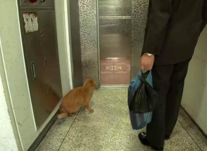 阿公已故後 橘貓想念爺爺 每天電梯門口癡等 孤單背影網心疼