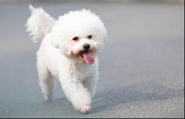 棉花糖小白是只「熊」?3點教你如何馴服小新同款寵物——小白~