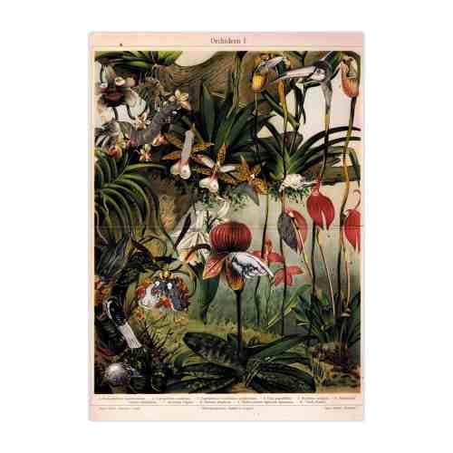 """""""Orchid""""  The Blueberrythinks by Jagoda Strączek, poster"""