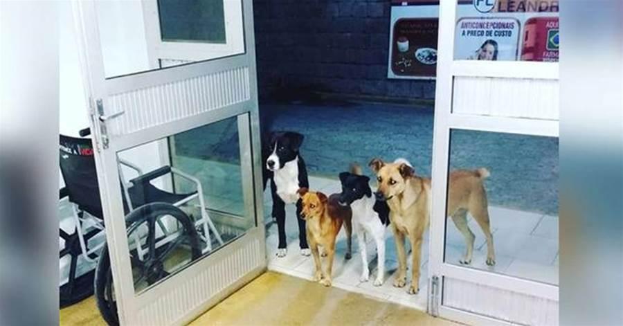 「別趕我走。我在等主人」流浪漢生病入院救治。6只流浪狗守在醫院門口不肯離開