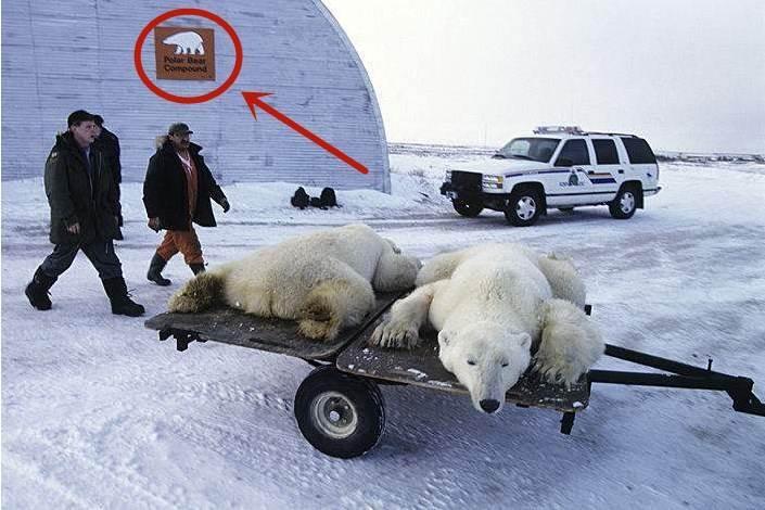 動物犯錯也要監獄?來看看這座北極熊監獄