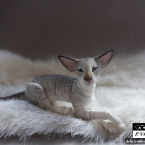 tabby_cat_bjd_2