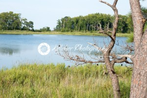 Thickets of reeds and Chesapeake Bay on Maryland Eastern Shore near Rock Hall, MD - Kelleher Photography Store