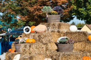 ALLENTOWN, PA – OCTOBER 22: Halloween Decorations at Dorney Park in Allentown, Pennsylvania - Kelleher Photography Store