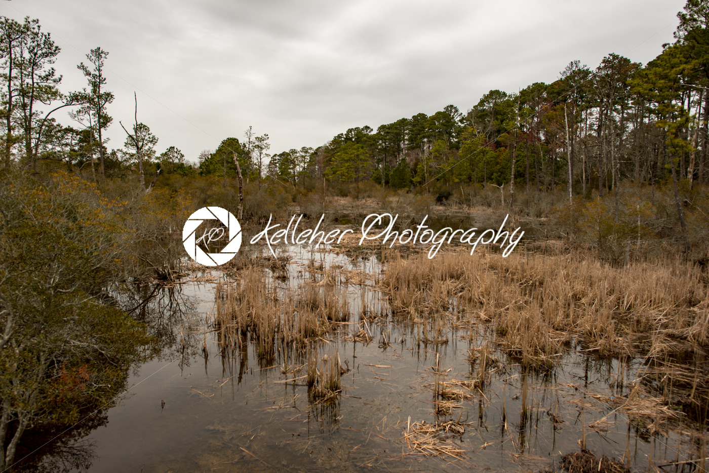 Swamp lake and trees in Jamestown, Virginia - Kelleher Photography Store