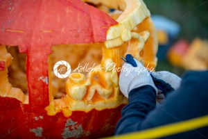 CHADDS FORD, PA – OCTOBER 18: Person carving pumpkin at The Great Pumpkin Carve carving contest on October 18, 2018 - Kelleher Photography Store
