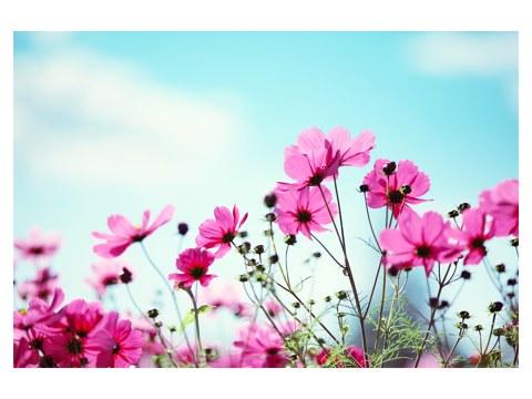 Stilvolles Bild mit Blumenwiese in besonderer Perspektive