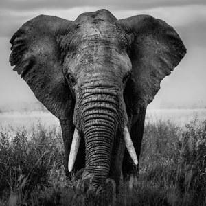 Beeindruckende Motive Afrikanische Tierbilder bei myposter