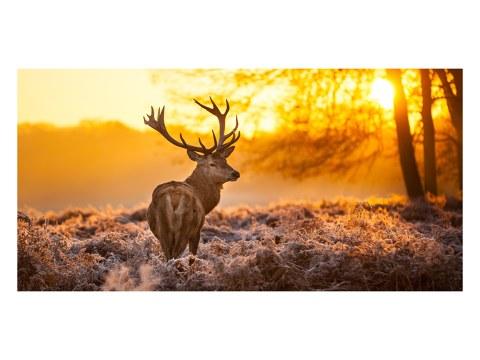 Traumhaftes Hirsch Poster im Sonnenuntergang