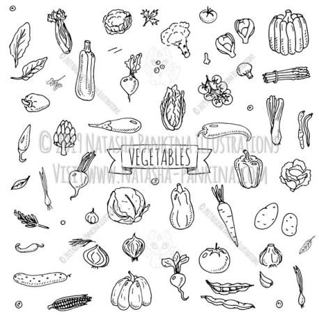 Vegetables. Hand Drawn Doodle Fresh Food Icons Collection. - Natasha Pankina Illustrations