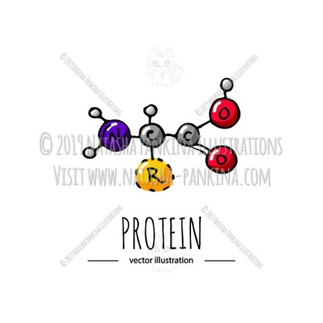 Weight Loss. Hand Drawn Cartoon Protein Chemical Formula Icon. - Natasha Pankina Illustrations