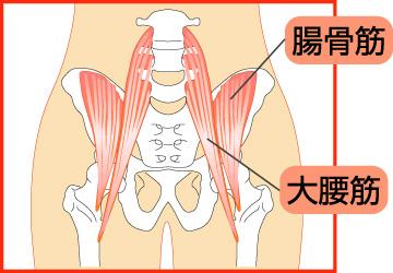 股関節周辺の筋肉図
