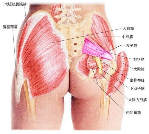 骨盤周辺の筋肉で外旋運動