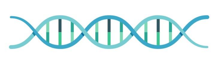 脂肪の蓄積は遺伝子で組み込まれている