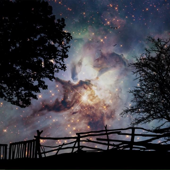 night sky black trees