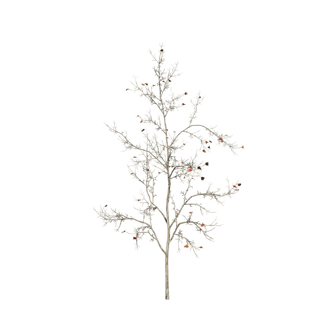 Red Maple Sapling Speedtree