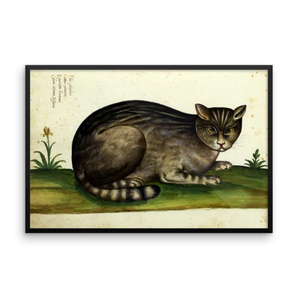 Ulisse Aldrovandi: Wild Cat from Natura Picta, 16th Century, Framed Cat Art Poster, 16×20