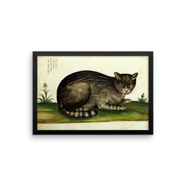 Ulisse Aldrovandi: Wild Cat from Natura Picta, 16th Century, Framed Cat Art Poster, 12×18