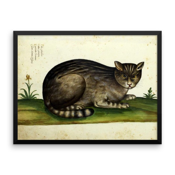 Ulisse Aldrovandi: Wild Cat from Natura Picta, 16th Century, Framed Cat Art Poster, 18×24