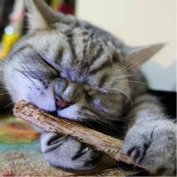 Natural Cat Nip Teeth Cleaning Sticks