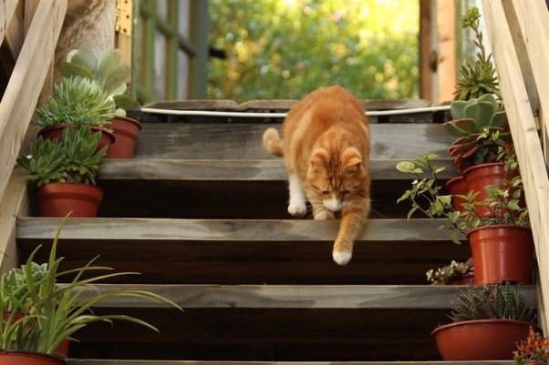 Most Friendly Cat Cities Corvallis 25 American Cat-Friendly Cities