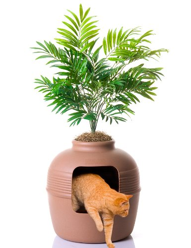 Top 5 Best Litter Box Solutions