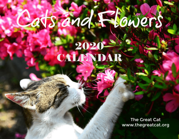 Cats and Flowers 2020 Wall Calendar
