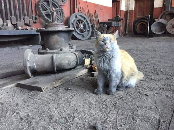 Dirt the Railway Cat