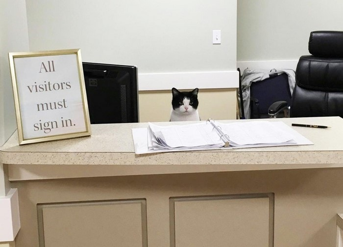 Oreo the cat works at nursing home 2