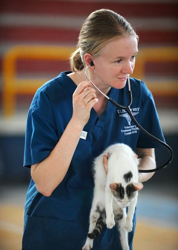 Vet and Kitten, cat health, arthritis