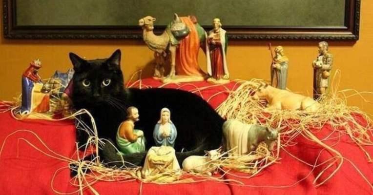 cat in manger , get a cat, get lucky
