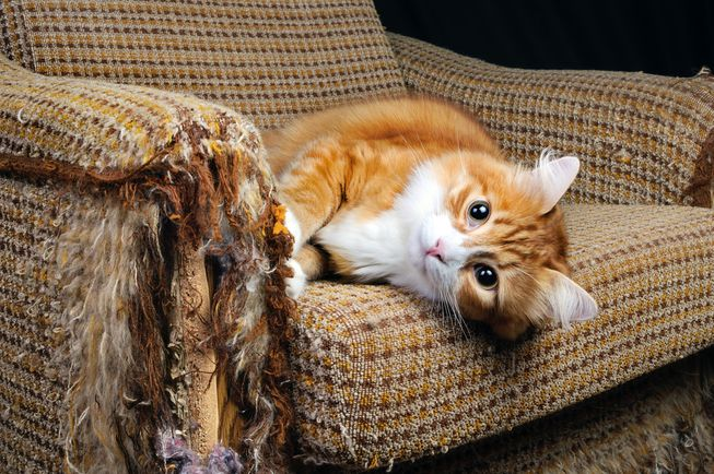 save your furniture from your cat