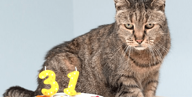 Why You Should Adopt an Older Cat