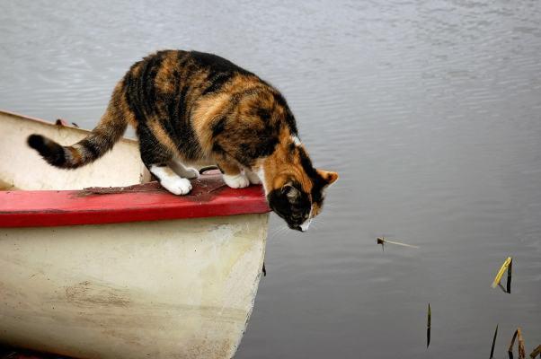 get a cat, get lucky