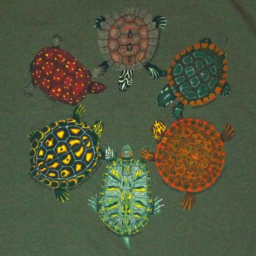 LS-Turtle-2