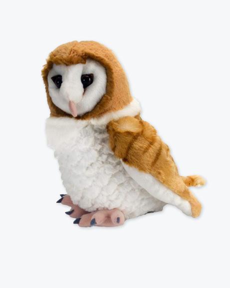 CK-Barn-Owl