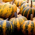 Oilseed pumpkin