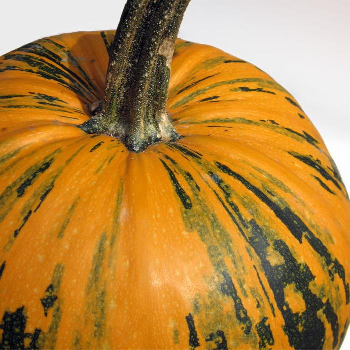 Styrian Pumpkin Seed