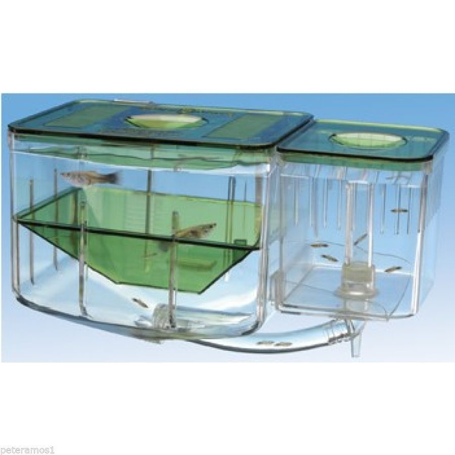 Aquarium Kits Betta Fish