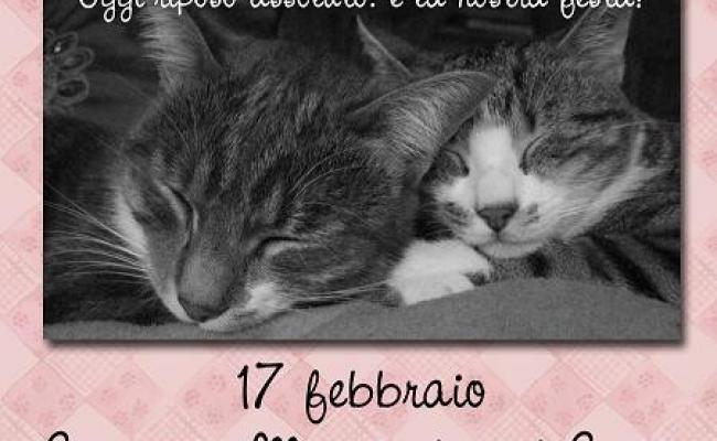 Festa Del Gatto Belle Storie D Amore E Di Amicizia