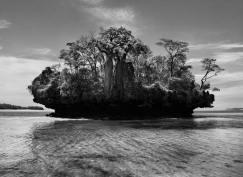 Alberi di Baobab – Baia di Moramba. Madagascar 2010, © Sebastião Salgado/Amazonas Images