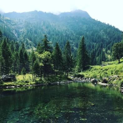 bosco di montagna