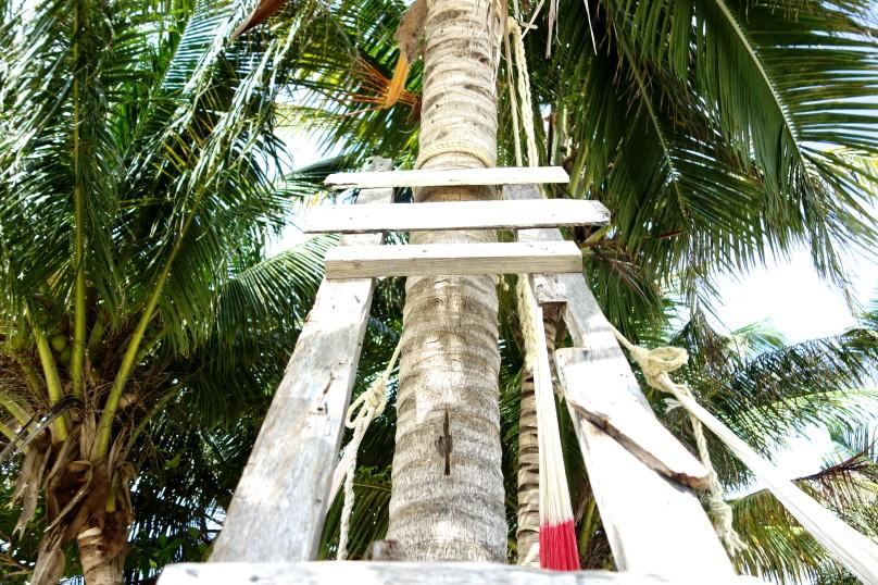 1.Kokospalme