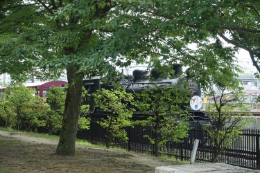Stea,m locomotive behind a tree