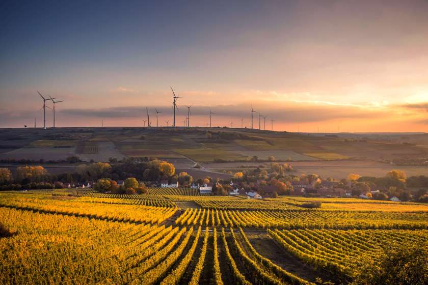 ways to reduce and fight climate change